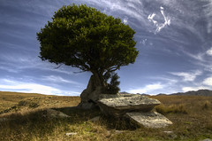 The Lonely Tree (geraldlim89) Tags: blue sky mountains tree grass leaves clouds landscape nikon rocks branches land trunk d7000