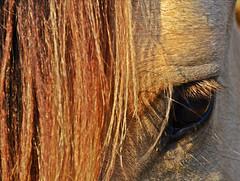mirada (Laura Mti) Tags: horse eye caballo ojo