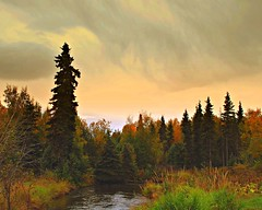 Autumn In Alaska (MarculescuEugenIancuD60Alaska) Tags: autumn fall alaska anchorage ourtime blueribbonwinner saariysqualitypictures sailsevenseas coppercloudsilvernsun fleursetpaysages outstandingromanianphotographers