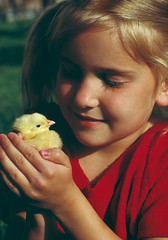 """Little girl holding a baby chick (IronRodArt - Royce Bair (""""Star Shooter"""")) Tags: baby chicken nature girl animals holding child affection little farm chick cuddle agriculture care interest hold husbandry protect"""