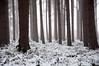 Stapleford. (djshoo) Tags: nottingham trees winter england mist snow fog forest woods newark d90