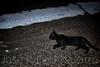 Cuando se cruza un gato negro en tu camino... (José Rafael Navarro) Tags: street españa black cat calle spain negro bad gato luck mala albacete suerte superstición tobarra