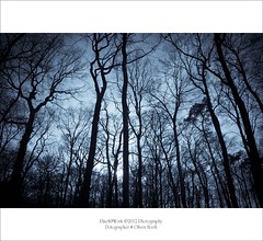 Deep in the Woods (oliver's | photography) Tags: nature photoshop canon eos flickr raw image  adobe copyrighted deepinthewoods adobephotoshoplightroom oliverhoell allphotoscopyrighted