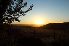 Llandegla in the Evening Light. (Mat Price) Tags: tree fence sheep eveningsun eveningsky dpp llandegla canon1740mm cokinpolarizer canon70d