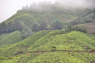 cameron highlands- malaisie 28