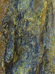 4/5/16 12:56 (joncosner) Tags: california marin abstracts marinheadlands northbay tennesseevalley ggnra 2016 stars3