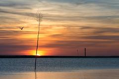Wattenmeer - Bensersiel (Michael A64) Tags: nikon meer sonnenuntergang sony sonne nordsee wattenmeer bensersiel 75150 a6000