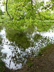 Skippett Pond - branches hanging down to the water (Tony Hirtenstein) Tags: trees oxfordshire oxon finstock skippettpond