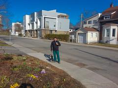 First flowers spring 2014 (lezumbalaberenjena) Tags: dog chien ontario canada boston ottawa perro terrier bully