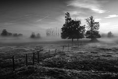 Le coeur gris (photosenvrac) Tags: bw photo noiretblanc nb ciel brume sologne