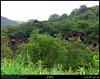 Ain Athoom, Nashib, Salalah, Dhofar (Shanfari.net) Tags: green nature season lumix raw natural panasonic vegetation greenery lush oman fz zufar rw2 salalah sultanate sarb dhofar عمان khareef سلطنة خريف صلالة dufar صلاله ظفار الخريف محافظة موسم dhufar governorate dofar fz38 fz35 dmcfz35 الصرب صرب