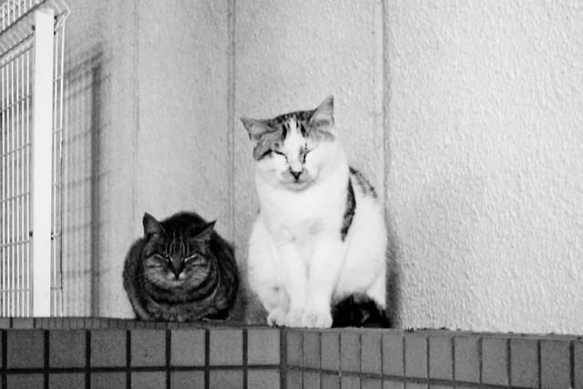 Today's Cat@2011-11-29