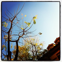 fall (SS) Tags: above city november blue autumn light sky italy orange brown white house black hot roma tree green fall leaves weather yellow composition contrast square photography mood shadows view angle pov walk branches perspective roofs clear bouquet framing tone lazio celeste iphone
