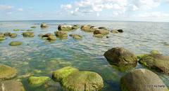 Green Stones (hartp) Tags: color colour green beach colors d50 catchycolors nikon meer natural stones natur steine shore grn rgen farbe ostsee farben selin kste helluva welltaken hartp hartp94315 wowiekazowie