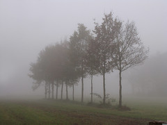 Trees in mist (Wilma1962*) Tags: autumn trees mist fall fog bomen herfst najaar mygearandme mygearandmepremium mygearandmebronze mygearandmesilver mygearandmegold mygearandmeplatinum