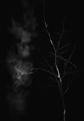 tree (self) (wood_owl) Tags: ohio bw tree nature night dark experimental flash breath exhale cvnp kendalllake selfaselemental