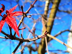 end of fall (Riley Nicole) Tags: autumn sky fall leaf sticks seasons branches changing buds twigs