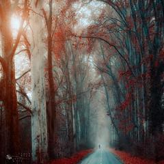leave the road (ildikoneer) Tags: wood autumn trees light shadow fall nature colors leaves forest canon season landscape eos leaf hungary mood bold pilis dobogk 40d colorphotoaward