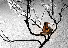 Birdhouse {Explored} (susivinh) Tags: snow branch nieve birdhouse rama