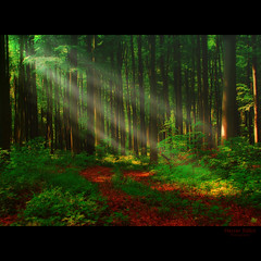 always touch the light / rkk rjen a fny (heizer.ildi) Tags: trees light leaves forest woodland woods hungary niceshot termszet fa tavasz tj fny tjkp t erd digitalcameraclub 100commentgroup canonsx10 bestcapturesaoi elitegalleryaoi mygearandme