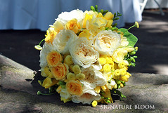 Wedding Flowers Mountain View - Yellow and Cream Bouquet (Signature Bloom) Tags: pictures wedding decorations flower floral rose yellow garden for design spring designer events sanjose images peony designs florist vendor siliconvalley mountainview bridal decor peninsula southbay ideas weddingflowers bouquets weddingphotos freesia floraldesign sanjoseca specialevents weddingideas sprayroses bridalbouquet bridalflowers weddingdecorations 94539 gardenrose floraldesigner flowerdesign 94040 gardenbouquets 95121 creamwedding weddingflorist weddingfloral yellowwedding weddingvendor gardenrosebouquet flowersforwedding sanjoseflorist springbouquets yellowbouquets sanjoseweddingflowers signaturebloom wwwsignaturebloomcom sanjoseweddingflorist bridalflorist weddingfloristsanjose creambouquets springweddingbouquets mountainviewweddingflowers