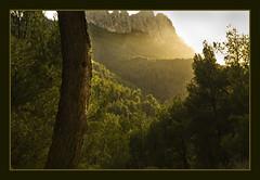 IMG_2763 Sierra de Orcheta 1 (jaro-es) Tags: espaa mountains tree nature clouds canon spain natur wolken natura bergen baum spanien montaas calpe costablanca spanelsko eos450 aboveandbeyondlevel1 aboveandbeyondlevel2