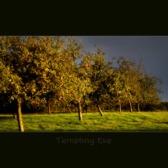 Tempting Eve (jinterwas) Tags: eve blue green apple netherlands yellow eva groen blauw paradise nederland free orchard cc creativecommons bergenopzoom temptation geel appletrees appels appelbomen paradijs verleiding freetouse kraaijenberg