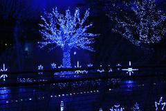 Christmas Lights, 2011 (rosewoodoil) Tags: christmas blue light dublin lights christmaslights centurian 200 100views 200views 100 2011 bonneannée joyeuxnoël καλάχριστούγεννα photographedublin somethingblueinmylife