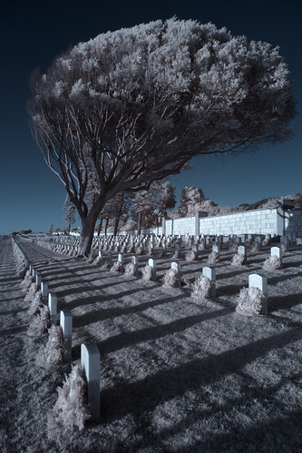Leaning Tree at Fort Rosecrans - IR