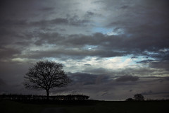chercher le bleu (_wysiwyg_) Tags: campagne countryside paysage landscape nordpasdecalais ciel sky arbresolitaire lonelytree silhouette janvier january nature cloudy day