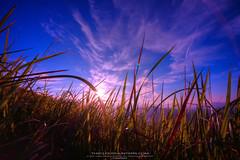 broga hill at 080112 (adamraufz.inc) Tags: sunrise landscape slowshutter