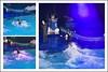 Dolfinarium & Frans Bauer _ 42 (@2008) Tags: people holland netherlands collage zoo dolphin dolfinarium harderwijk dolfijn fransbauer a900 zeiss135mmf18 sal135f18z sal135f18za
