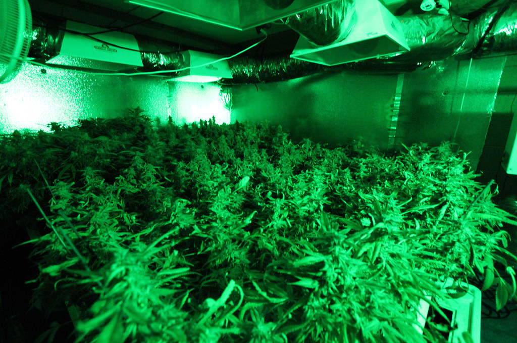 Medical Cannabis Growing Operation in Oa by Rusty Blazenhoff, on Flickr