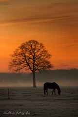 Gratitude turns what we have in plenty. * explore * (dewollewei) Tags: winter horse tree sunrise explore soe overijssel ommen beerze platinumheartaward lifethruyureyes
