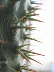12-01-14 Dschungel (60) (Gaga Nielsen) Tags: city urban plants berlin home downtown flat zuhause pflanzen jungle wilderness urbanjungle wohnung mitte dschungel kaktus daheim wildnis mansarde dachgeschoss auguststr auguststrase