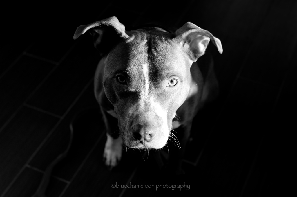 The World's Best Photos of bw and pleading - Flickr Hive Mind