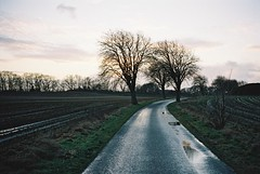 (Aage Drake) Tags: road sky tree film wet 35mm denmark shower evening fields contaxt2 kodakportra400