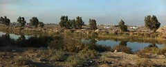 Marshland, Southern Iraq