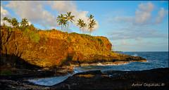 Rough Shore of Kauai (Artvet) Tags: