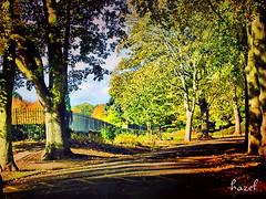 Western Park Avenue of Trees (**Hazel**) Tags: road park trees western dphdr autohdr