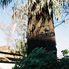 EMOCLEW (susan catherine) Tags: 120 rolleiflex backwards trunk sandimas cutoutsign lookedrightintherollei