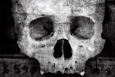 Not a Number (Arddu) Tags: skull number human bone