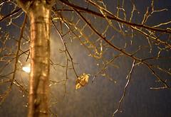 Noches de lluvia (inmacor) Tags: winter tree rain night contraluz golden noche lluvia invierno farol dorado castelln ramas ltytr1 inmacor arbolhojas blinkagain conlacmarabajolalluvia