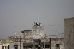 Kite flying in India (pattyPatel) Tags: india kite rooftop flying sankranti makar