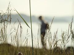 straw (martinalinnea) Tags: sea summer evening straw bohusln ulvn ginordicjan12