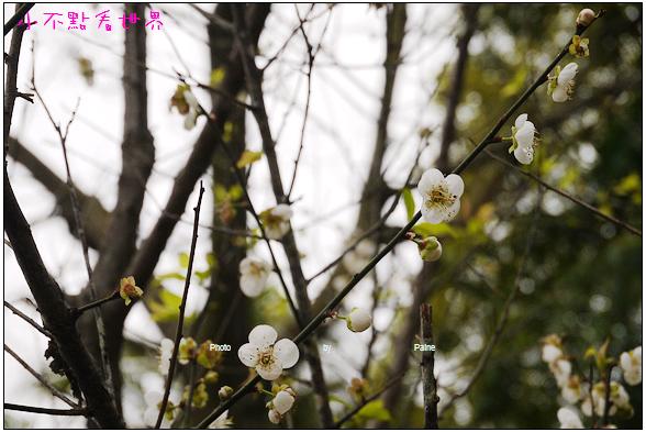 梅山公園 (30).JPG