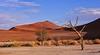 """Dunes 03 (lencomb) Tags: tree desert deadtree namibia sossusvlei desert"""" dunes"""" """"huge """"namib """"enroot sossusvlei"""""""