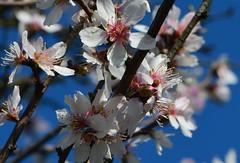 Blüten (deta k) Tags: