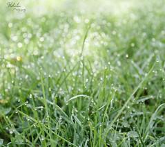Little Jungle (Wikalia) Tags: wild nature colors fleurs canon landscape eos eau lyon couleurs branches vert bleu ciel land t printemps sapin plantes herbe gouttes sauvage rose verdoyant lentilly 1100d