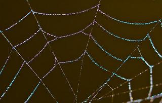 Rainbow Web.